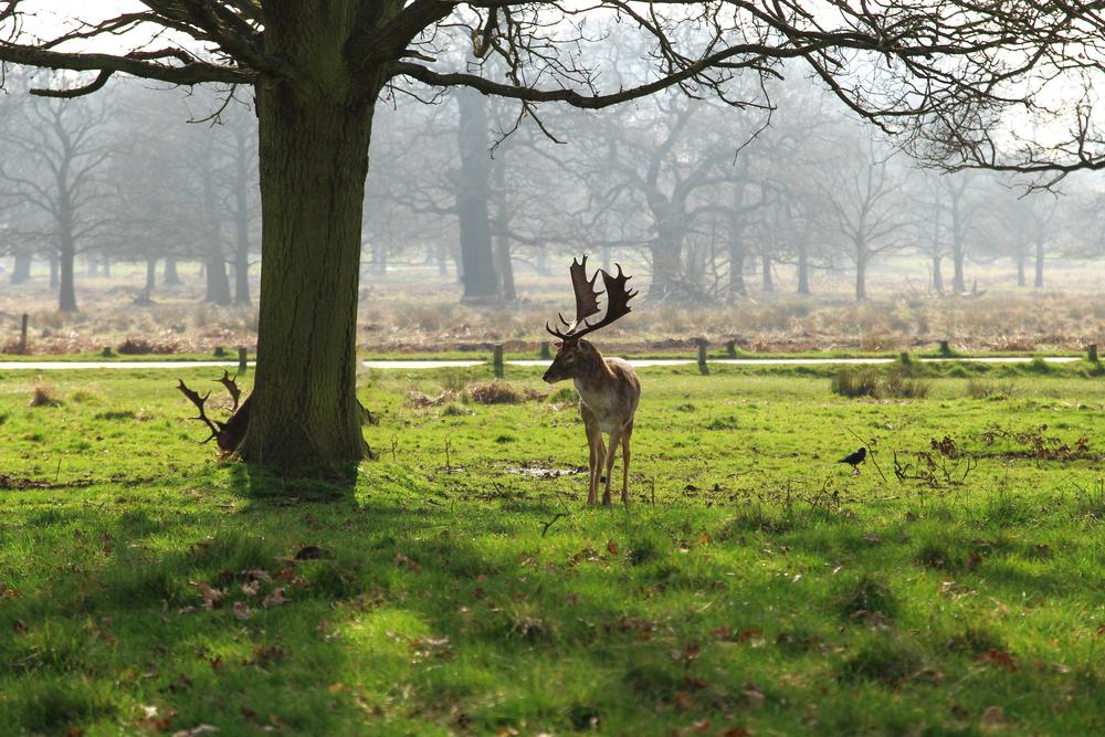 Royal Parks of London