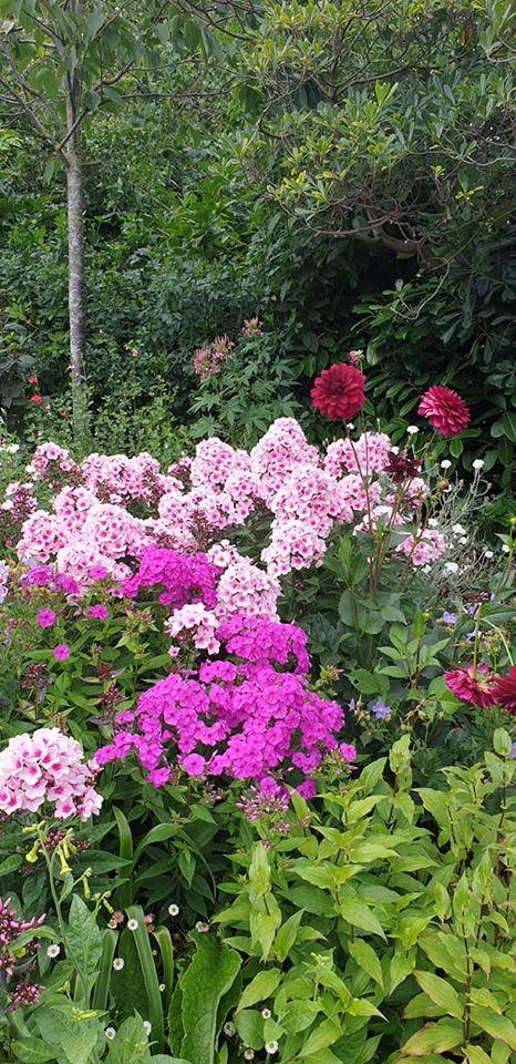 Flowers in St. James' Park, London