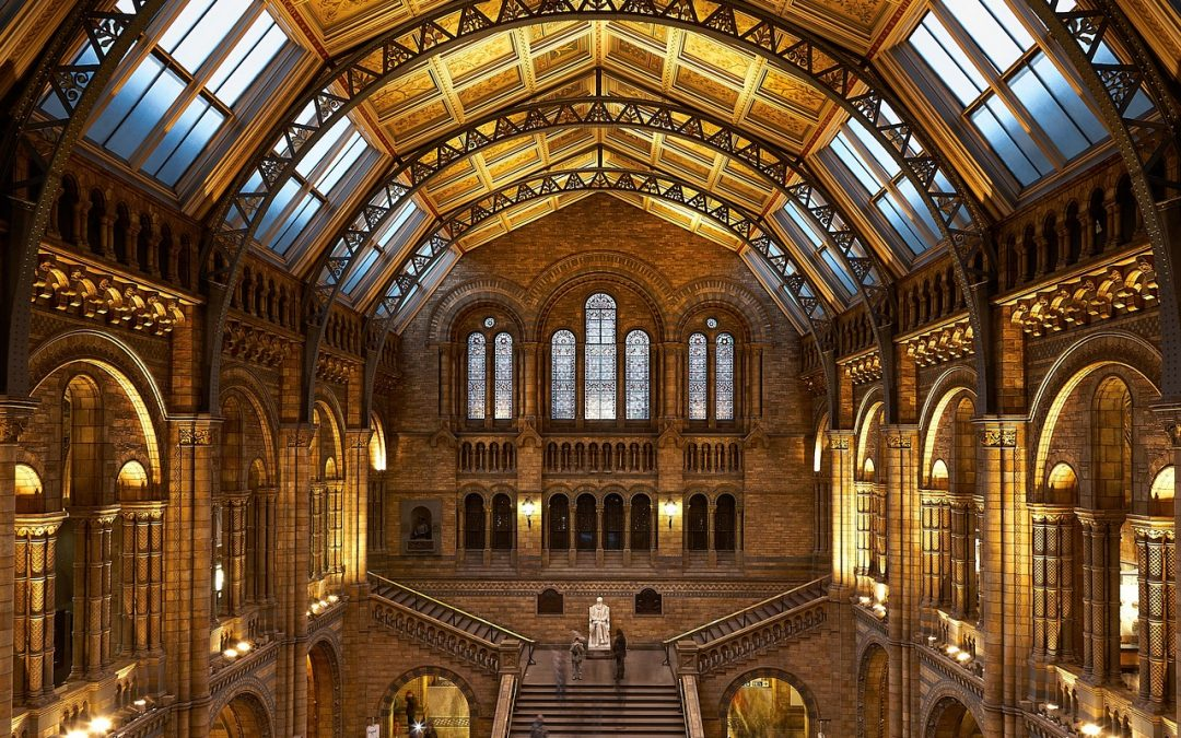 An Insider's Natural History Museum Guide for First Time Visitors