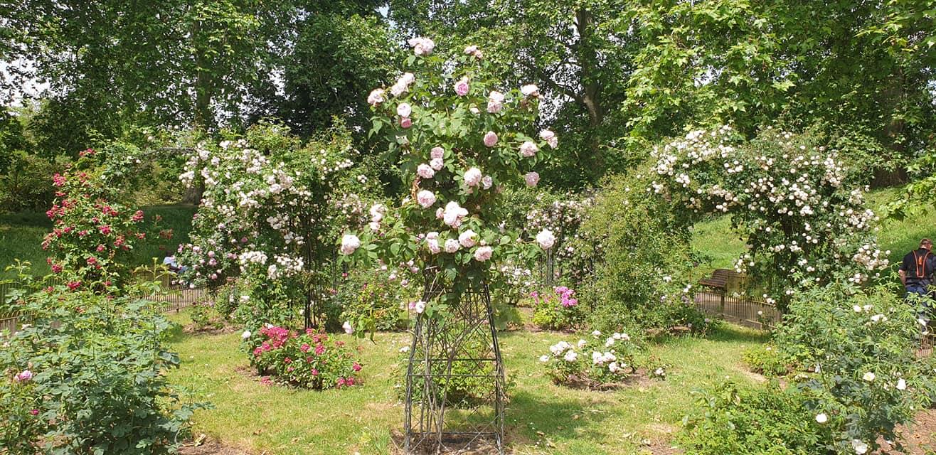 Rosery Garden, Battersea Park