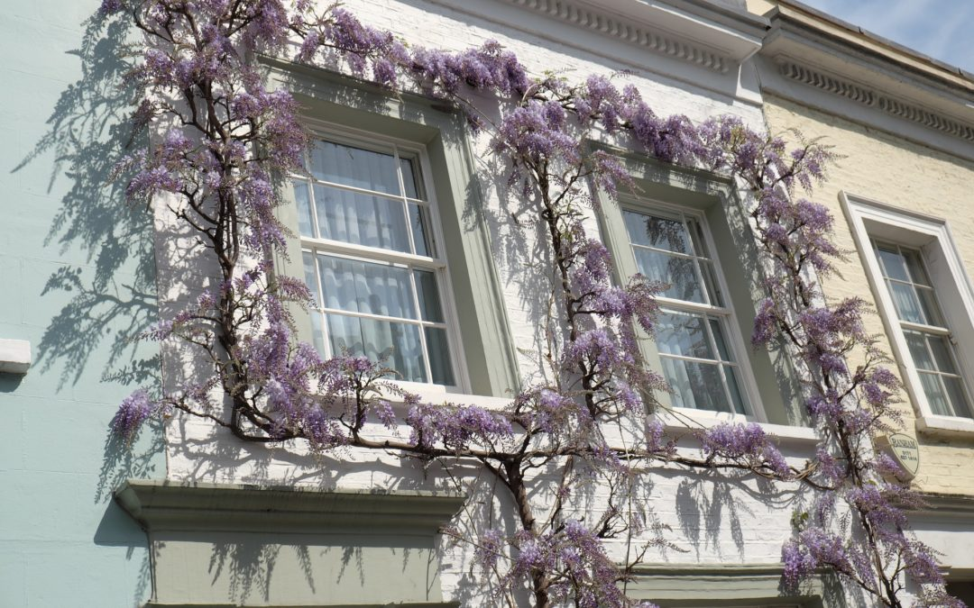 Things to do in Chelsea London
