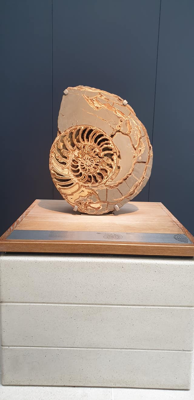 Fossil at the Natural History Museum