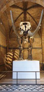 Mammoth fossil