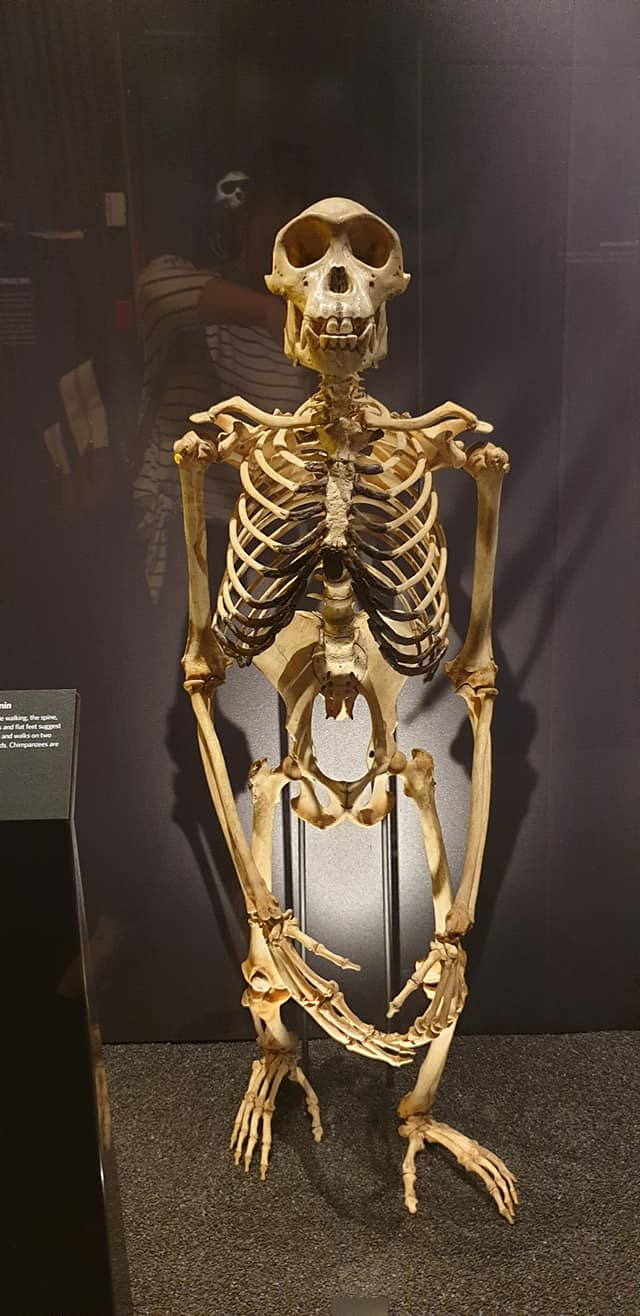 Skeleton at the Natural History Museum