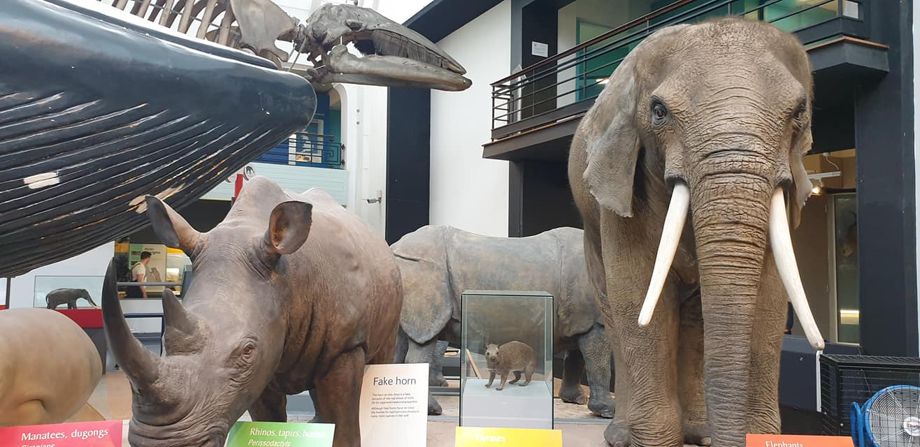 The Blue Whale Gallery, the Natural History Museum